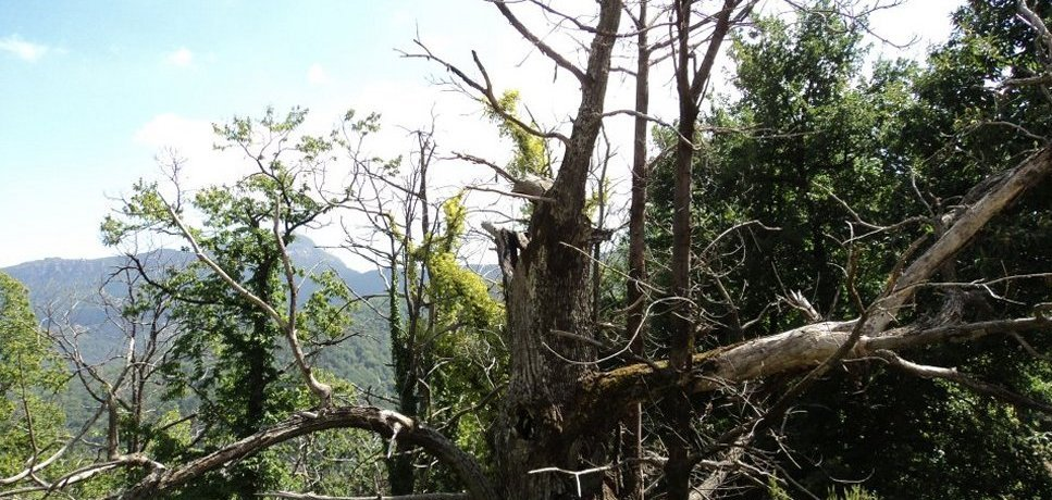 Castagniccia, en Corse, signifie terre du chataignier